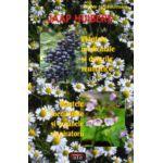 Plantele medicinale si durerile reumatice - Plantele medicinale si organele respiratorii