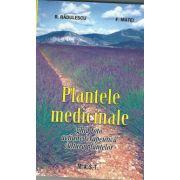 Plante medicinale: ghid foto, actiune terapeutica, cultura plantelor